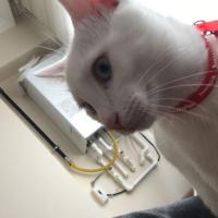 Bozo (KAYIP kedi)
