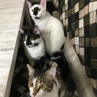 4 kardeşler